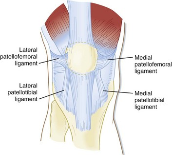 Knee ligament diagram